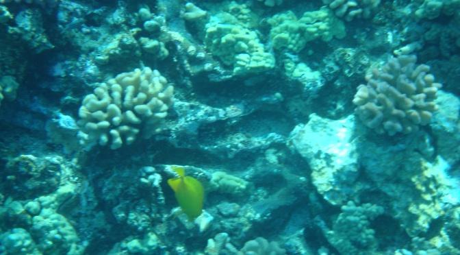 Outdoor Adventures in Maui: Snorkeling